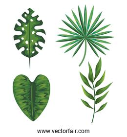 set of tropical leaves plants over white background