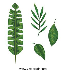 set of exotic leaves plant over white background