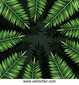exotic branches leaves nature plants