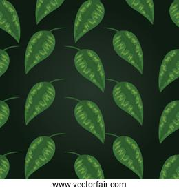 tropical leaves exotic plant design