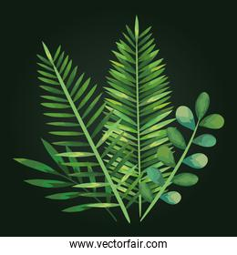 exotic plants with nature leaves design