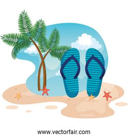 palms trees with flip-flop and starfishes in the beach sand