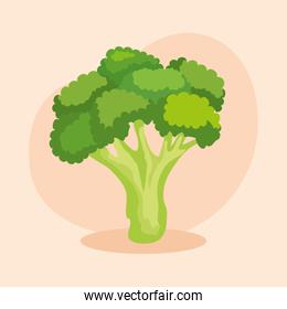 fresh broccoli vegetable and healthy nutrition