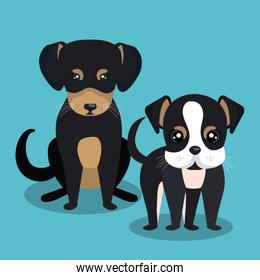 couple breed dogs isolated icon design