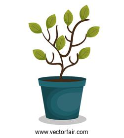 plant in pot isolated icon