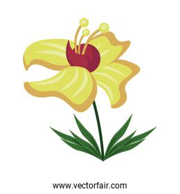exotic and tropical flower nature icon