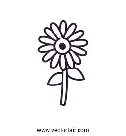 Isolated nature sunflower line style icon vector design
