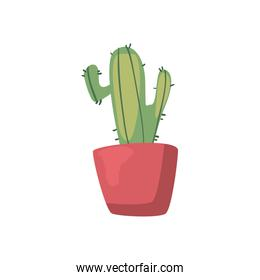 Isolated cactus plant flat style icon vector design