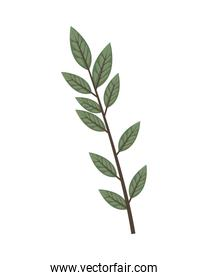 branch with leafs plant ecology icon