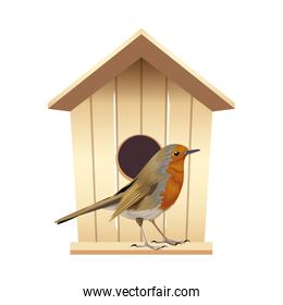beautiful bird with wooden house