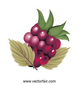 fresh grapes fruits nature icon