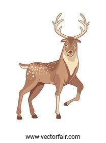 reindeer animal with horns character