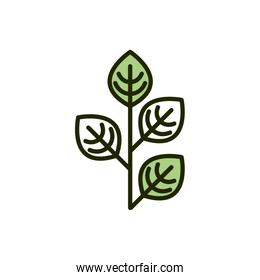 plant leaves natural environment ecology line and fill