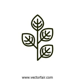plant with leaves in  natural environment line and fill style
