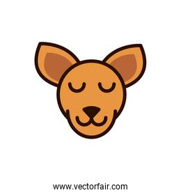 cute face kangaroo animal cartoon icon