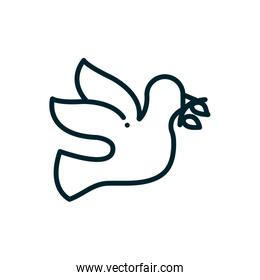 dove with olive branch peace and human rights line