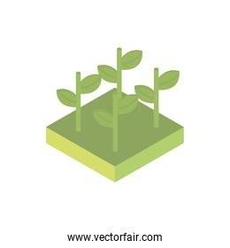 farm growth plants harvest agriculture isometric icon