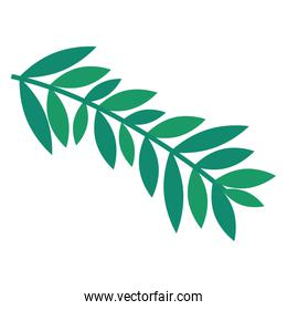 branch with leafs nature green icon