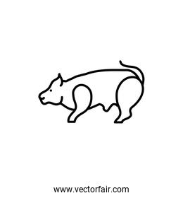 rodent rat animal isolated design