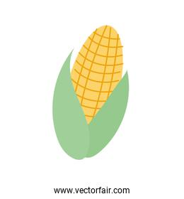 fresh corn vegetable fill style icon