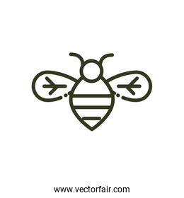 bee insect wildlife nature line design