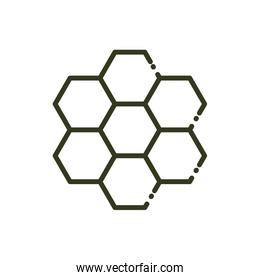 honeycomb structure bee nature line design