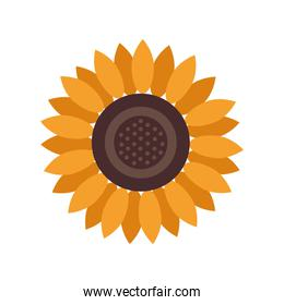 beautiful sunflower garden decorative icon