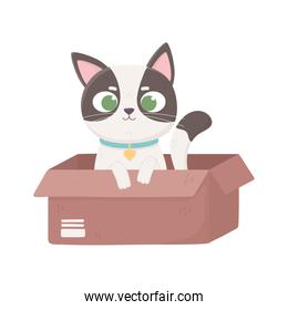 little cat with collar in the box, pets