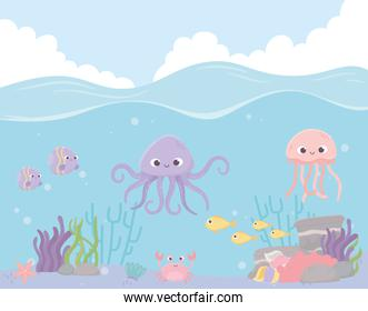 octopus jellyfish fishes crab reef coral under the sea