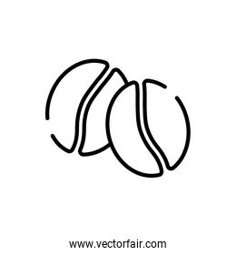 Isolated coffee beans line style icon vector design