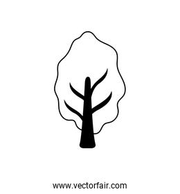 tree and plant on white background