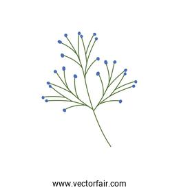 branch with leaf on white background