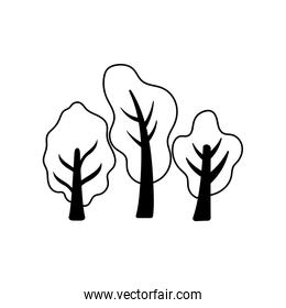 tree and plants on white background