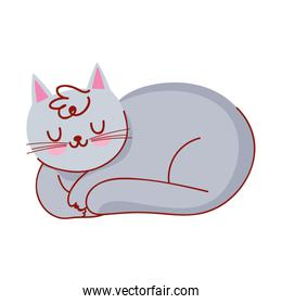 sleeping gray cat domestic pet cartoon isolated icon