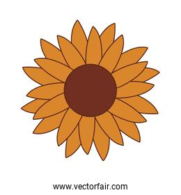 Isolated sunflower icon vector design
