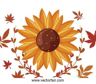 Isolated sunflower and autumn leaves vector design