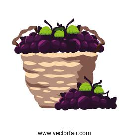 grapes with branch in wicker basket on white background