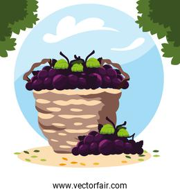 grapes with branch in wicker basket with background landscape