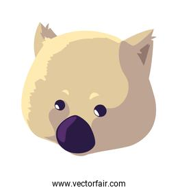 head of wombat on white background