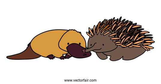 platypus and echidna on white background