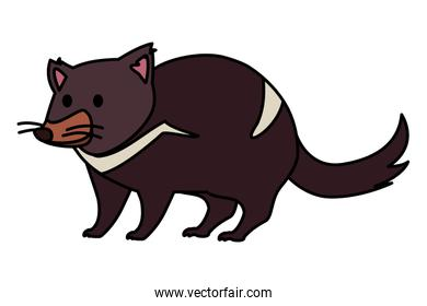 australian tasmanian devil on white background