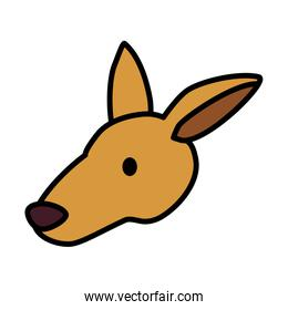 head of kangaroo on white background