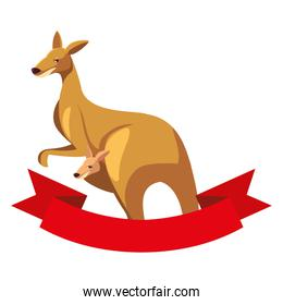 cute australian kangaroo on white background