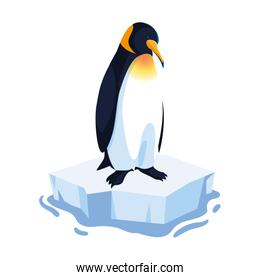 penguin on an ice floe drifting