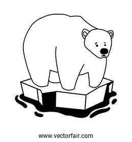 polar bear on an ice floe drifting on white background