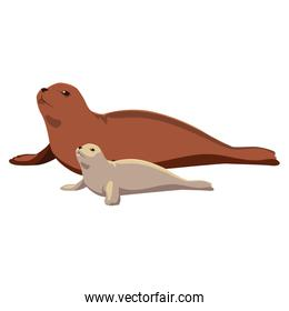 a seal fish with cub on a white background