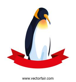 emperor penguin with ribbon on white background