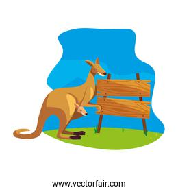 cute australian kangaroo with background landscape