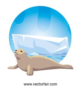 seal at the north pole, arctic landscape
