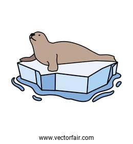 seal on an ice floe drifting